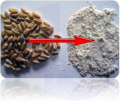 Sample Whole Wheat Flour