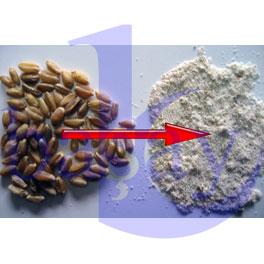 Örnek Tam Buğday Unu